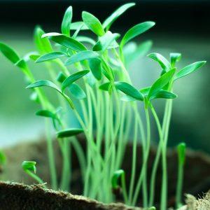 plants-2411458_960_720