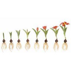 הזרעים שאנו שותלים בחודש תשרי