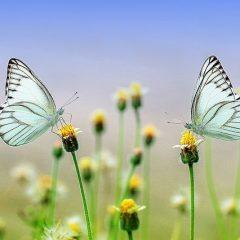 """""""ישן מפני חדש תוציאו"""" – רסטרט רוחני כתבה חיים אחרים 9.17"""